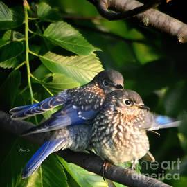 Baby Bluebirds 1 by Nava Thompson