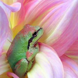 Baby frog by Irina Hays
