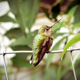 Pamela Patch - Baby Hummingbird in a Garden