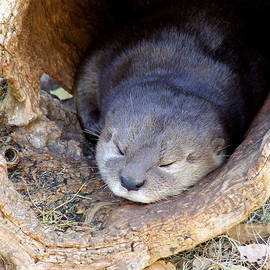 Mary Deal - Baby Otter
