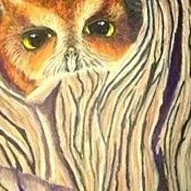 Jay Johnston - Baby Owl in Tree