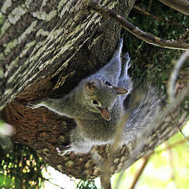 Trina  Ansel - Baby Squirrel on the Loose
