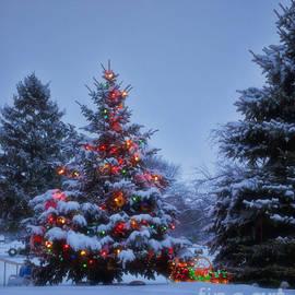 Thomas Woolworth - Backyard Christmas Tree