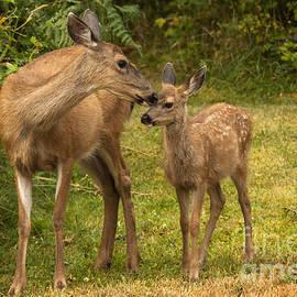 Motherly Love by Inge Riis McDonald