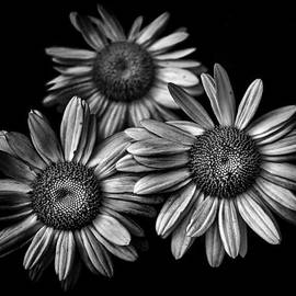 Backyard Flowers In Black And White 12 by Brian Carson