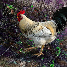 Anthony Forster - Backyard Rooster