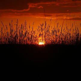 David Simons - Backyard Sunset