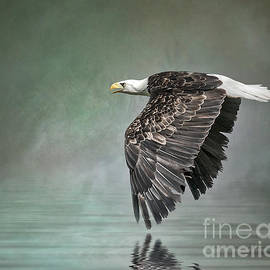 Brian Tarr - Bald Eagle in mist