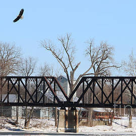 Jack Schultz - Bald Eagle near Ludwig Mill