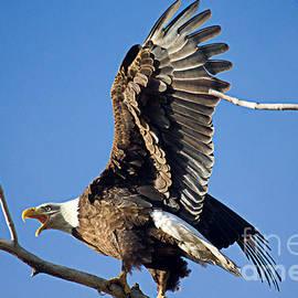 Bald Eagle Pre Flight Announcement by Bob Hislop