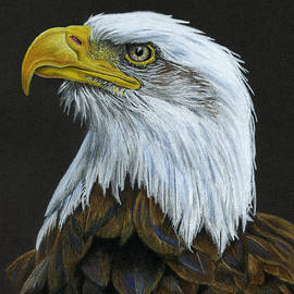 Bald Eagle by Sarah Batalka