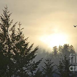 Nick  Boren - Bald Eagle Sunset