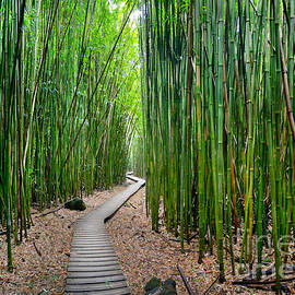 Bamboo Brilliance by Sean Davey