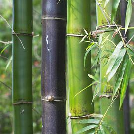 Bamboo Garden by Arlene Carmel