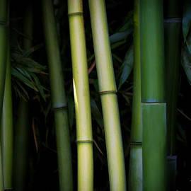 Athena Mckinzie - Bamboo Zen