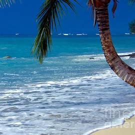 Sophie Vigneault - Barbados Beauty