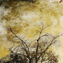 Bare Tree by Skip Nall