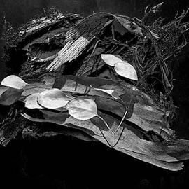 Klee Miller - Bark-n-Leaves
