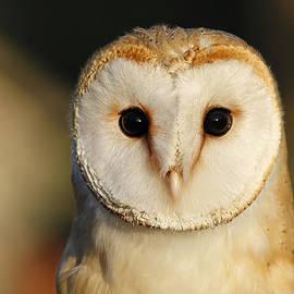 Barn Owl Beauty by Roeselien Raimond