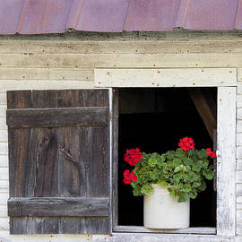 Barn Window Geraniums by Alan L Graham