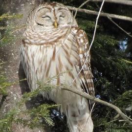 MTBobbins Photography - Barred Owl
