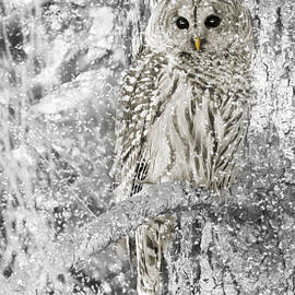 Barred Owl Snowy Day in the Forest by Jennie Marie Schell