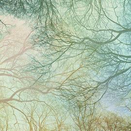 Barren Empty Trees by Silvia Otte