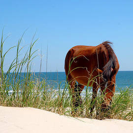 Barrier Island Mustang  by Broken  Soldier