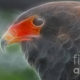 Gary Gingrich Galleries - Bataleur Eagle-4881-Fractal