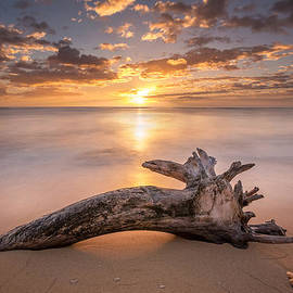 Beach Tree Sunrise by Pierre Leclerc Photography