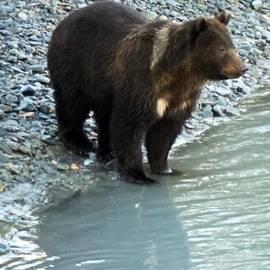 Dora Miller - Bear Cub Detail