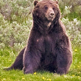 Bear by G L McGrath