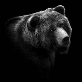 Lukas Holas - Portrait of Bear in black and white