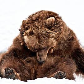 Athena Mckinzie - Bearly Sleeping