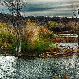 Kimberleigh Ladd - Beautiful Autumn Marsh