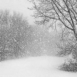 Beautiful Blizzard
