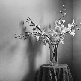 Amy Weiss - Beautiful Melancholy