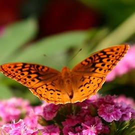 Laura Duhaime - Beautiful Moth in the backyard