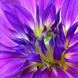 Laura Duhaime - Beautiful Purple Beauty