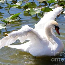 Carol Groenen - Beautiful Swan Wings