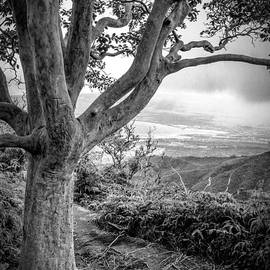 Edward Fielding - Beautiful tree looking down on a tropical valley