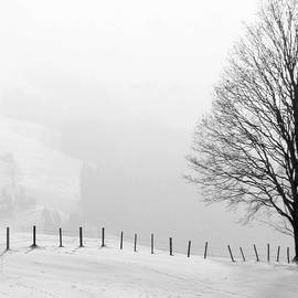 Beautiful winter landscape with tree and fence