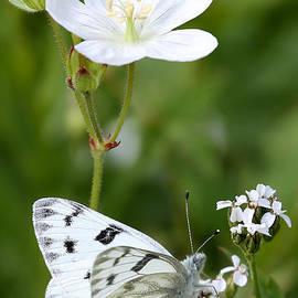 Beauty in White by Marty Fancy