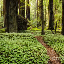 Beauty Of California Redwoods 1 by Bob Christopher