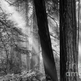 Beauty Of California Redwoods 4 Monochrome by Bob Christopher