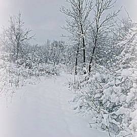 Kay Novy - Beauty Of Winter