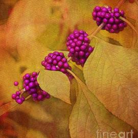 Judi Bagwell - Beautyberry