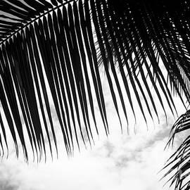 Sharon Mau - Maui Paradise Palms Hawaii Monochrome