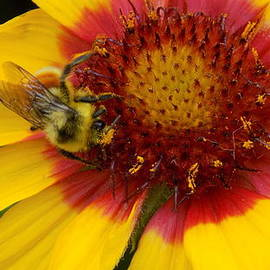Bee at Work by Penny Homontowski
