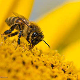 Bee's Treat by Sheen Watkins